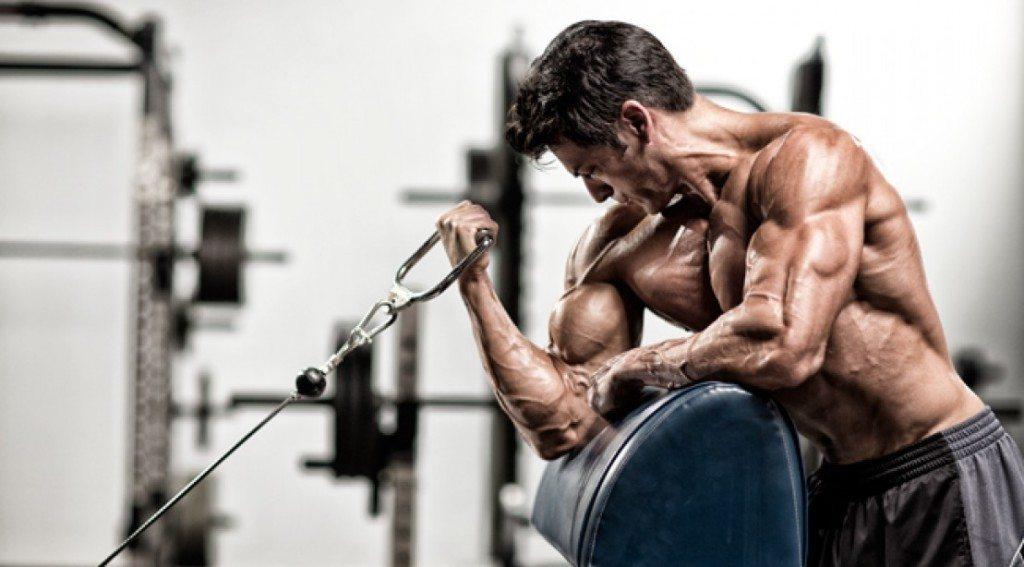 princip treninga - VJEŽBE ZA BICEPS